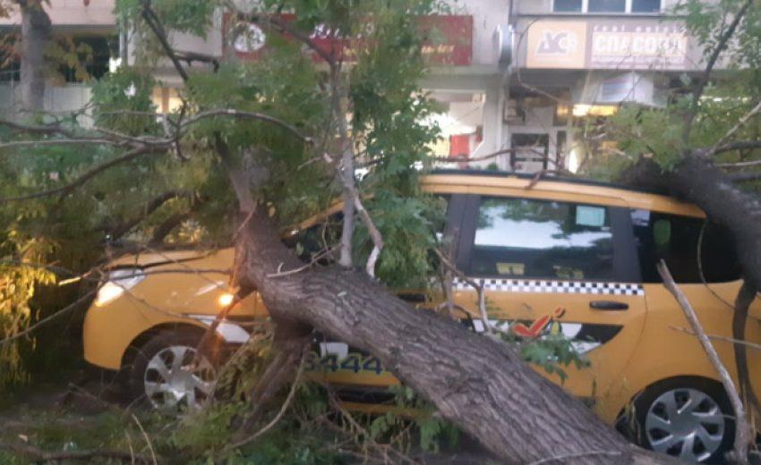Oгромно дърво се стовари върху няколко коли в центъра на Варна, на метри от училище