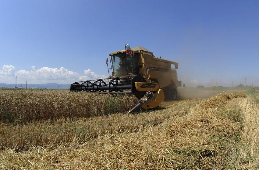 Рентите за земеделска земя в Добричко паднаха рекордно за последното десетилетие