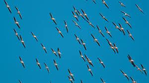 Започва наблюдение на прелетните птици в Гоцеделчевско