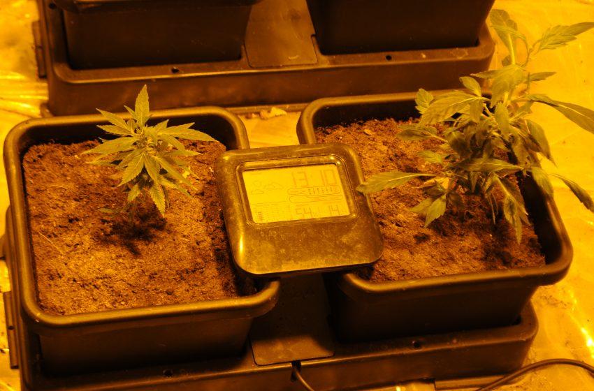 Помещение за отглеждане на растения от рода на канабиса разкриха служители на РУ – Оряхово