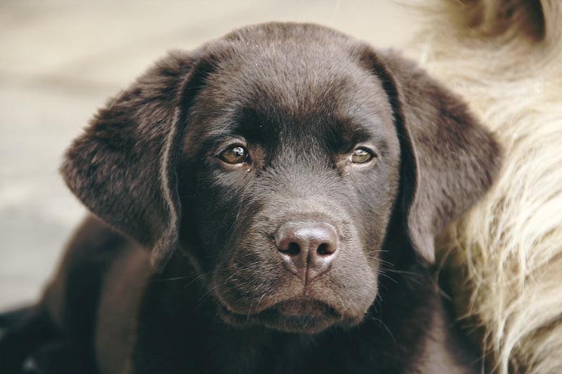 Кошмар в Сухата река: Кучета вият и се самоизяждат в боксониера