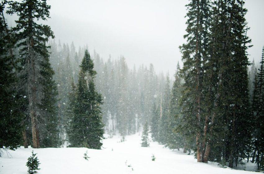Силен сняг вали на проходите Рожен и Превала